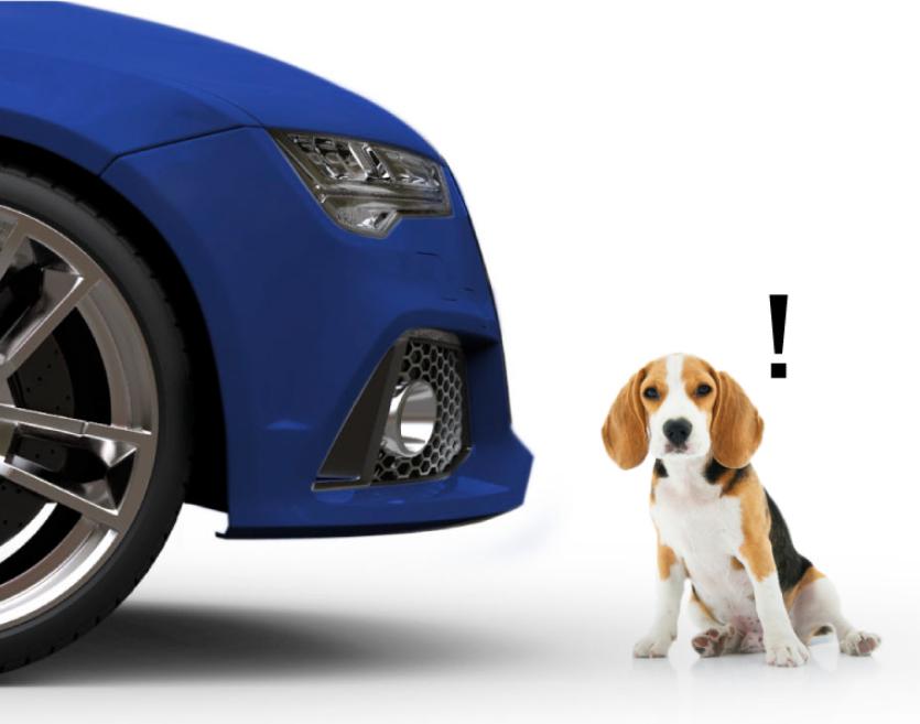 ขับรถชนสุนัข ใครผิด ประกันภัยช่วยอะไรได้บ้าง ?